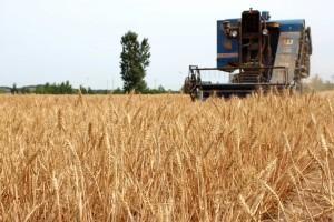 Как переводческие услуги могут преобразовать сельскохозяйственный сектор.